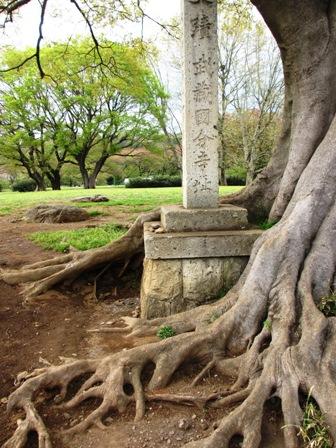 木の根の中2