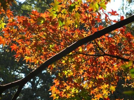2013.11.17日立製作所庭園の紅葉