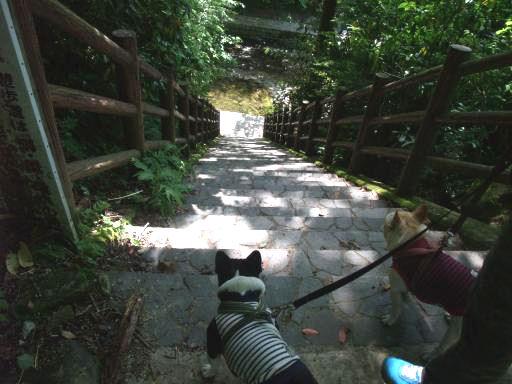 5-22行きの階段