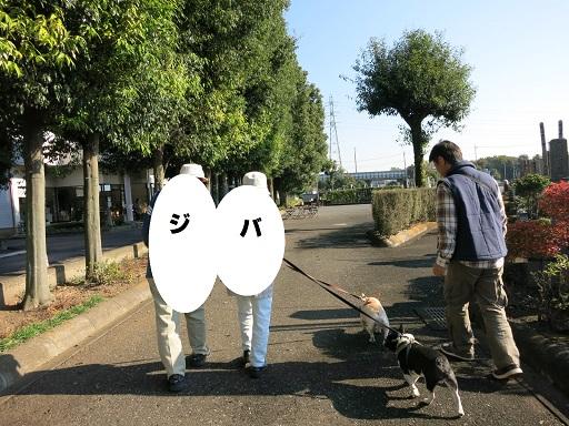 11-19じぃじばぁば