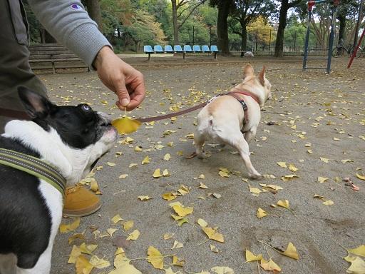 11-23ふる葉っぱ食べる