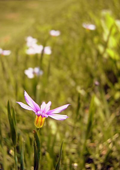 130514花と