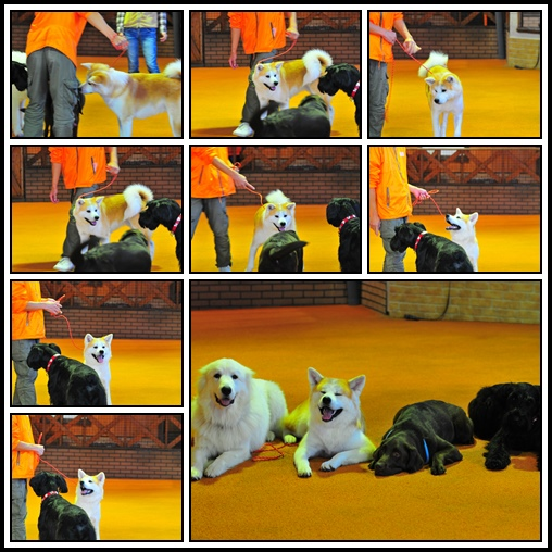cats-1_20131123103121053.jpg