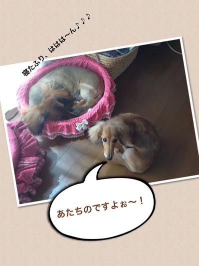 fc2blog_20130531122625ddc.jpg