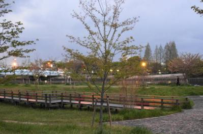 ゼミ桜 場所