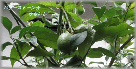 緑remonn
