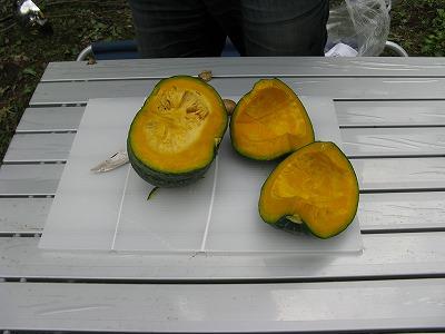 H260914収穫かぼちゃ-s