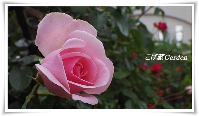 IMGP3527_R.jpg