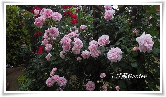 IMGP4242_R_201410191857533ba.jpg