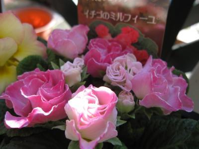 バラ咲きジュリアン・イチゴのミルフィーユ