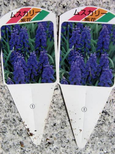 花壇の植栽-10