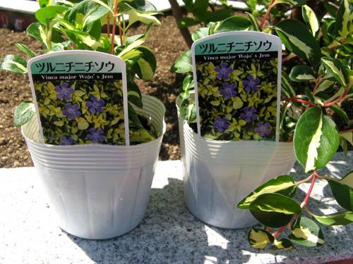 花壇の植栽-4