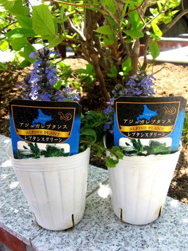 花壇の植栽-6