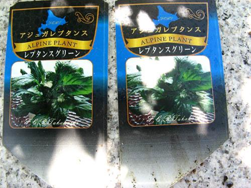 花壇の植栽-7