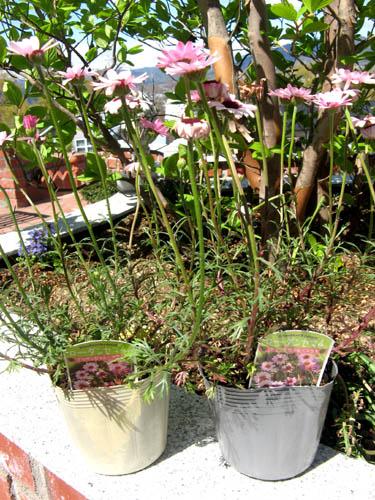 花壇の植栽-1