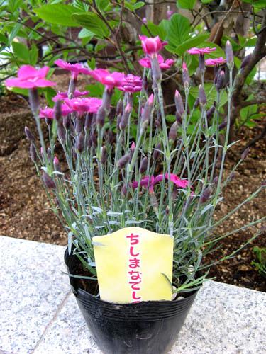 花壇の植栽-11