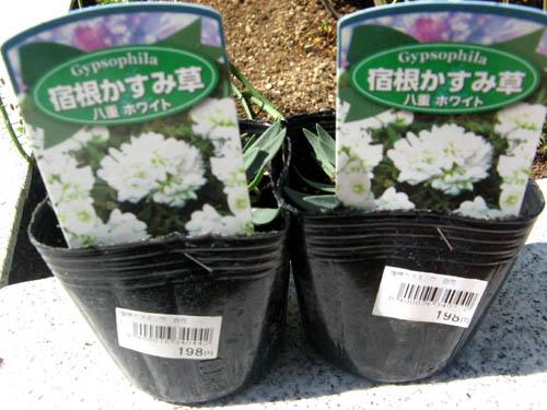 花壇の植栽-3