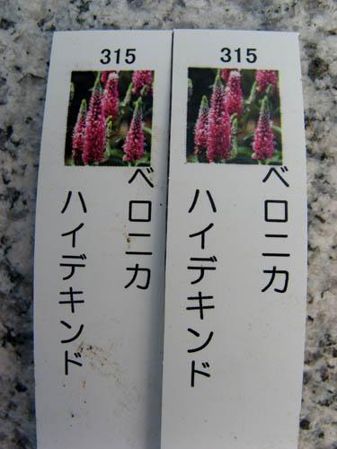花壇の植栽-5