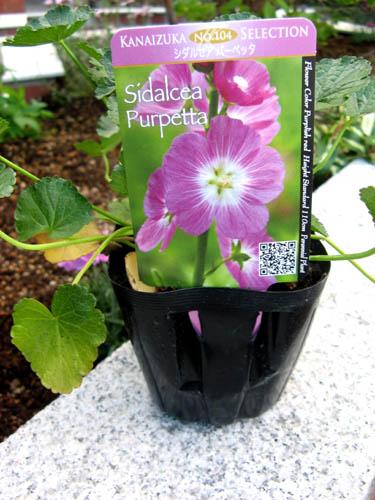 花壇の植栽-9