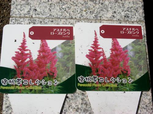 花を植える-4