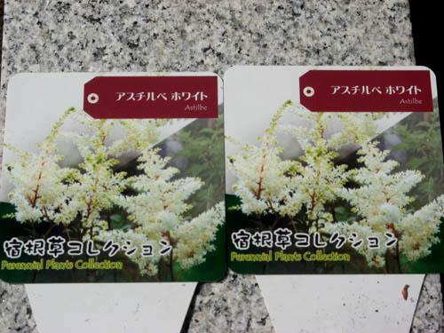 花を植える-8