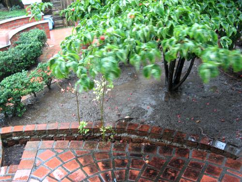 台風の庭-1