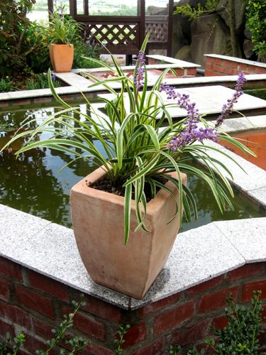 台風の庭-9