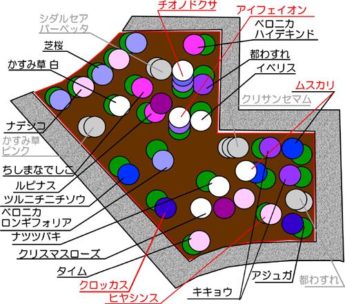 秋植え球根ー7