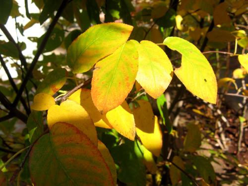 秋の気配-3