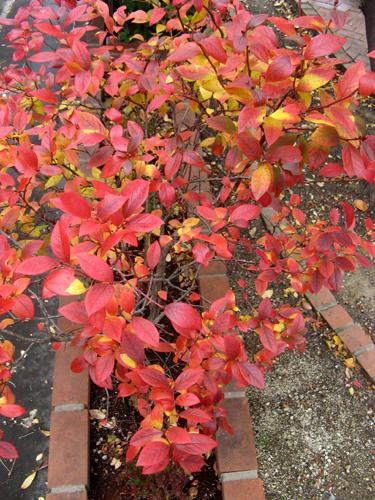 紅葉真っ盛り-1