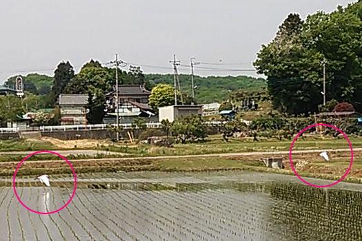 2013-05-10-2.jpg