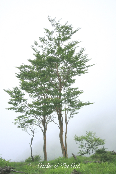 71tree2.jpg