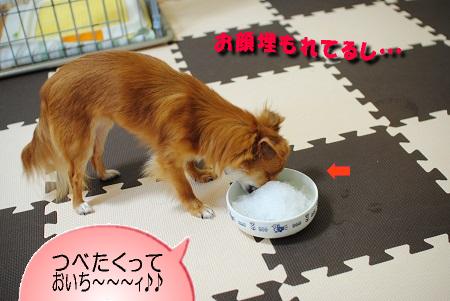 食べ続けるマヨ