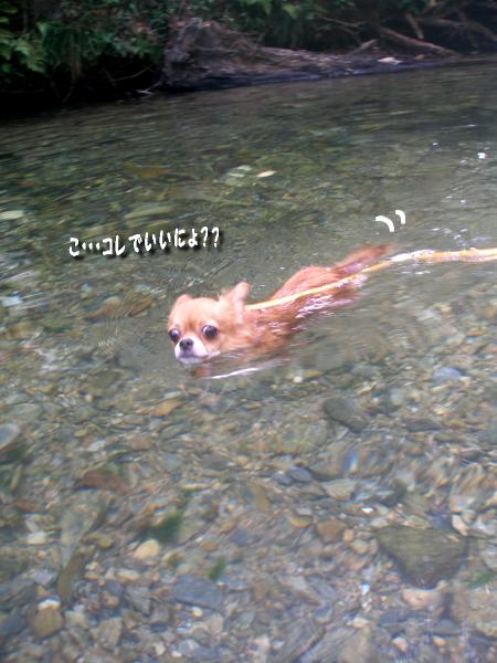マヨ泳ぐ2