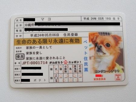 マヨの免許証