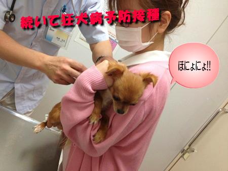 マヨ狂犬病予防接種