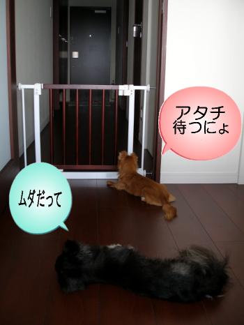 マヨ待つ3
