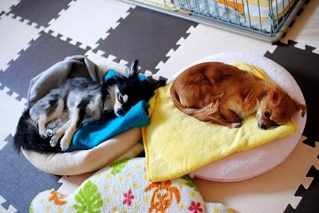 それぞれのベッドで