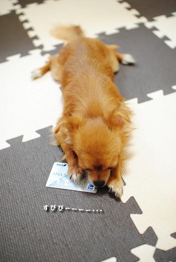 マヨのカード3