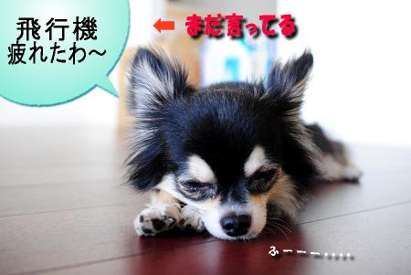 まだ疲れてる