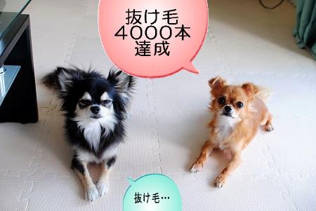 抜け毛4000本