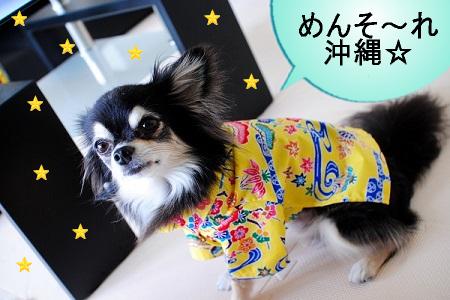 すっかり沖縄犬