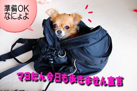 お決まりのバッグIN