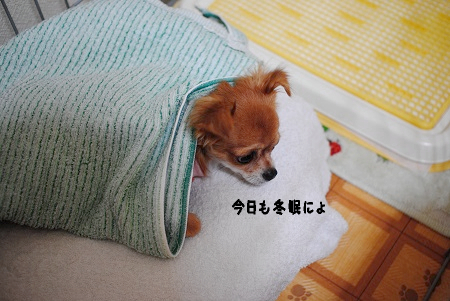 今日も冬眠マヨ子