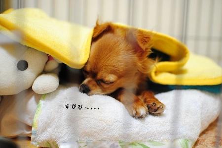 お休みです