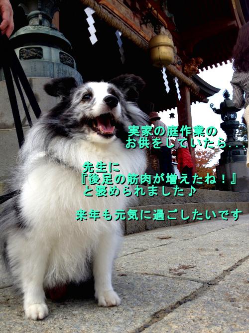 dori_20141224143012bf4.jpg