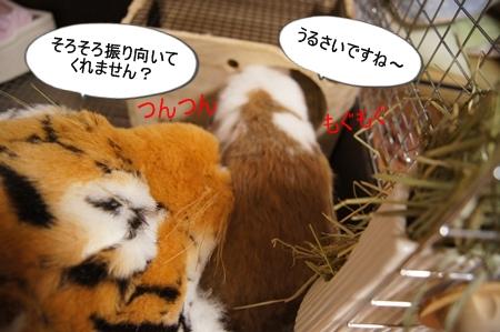 DSC09793_20130404135349.jpg