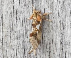 昆虫 (1)