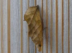 昆虫 (2)