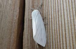 昆虫 (9)